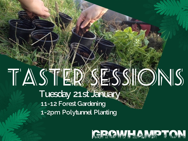 Taster Session: Polytunnel Planting