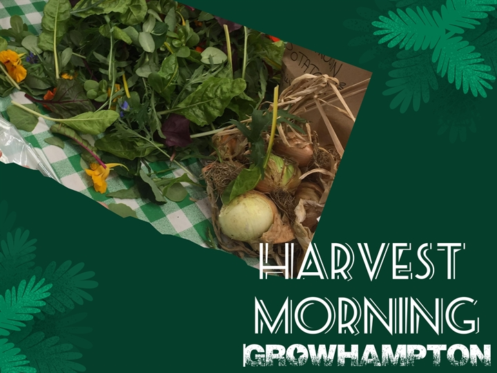 Harvest Morning