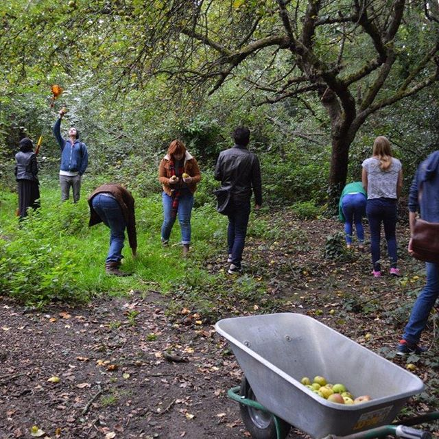 Learn2Grow: Woodland Care in the Old Orchard